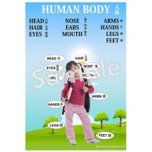 Human Body - Chinese Poster