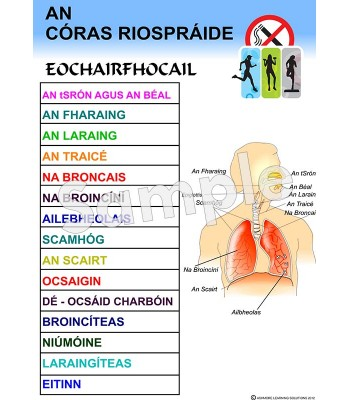 Respiratory System Poster
