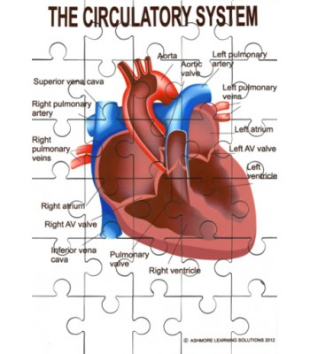 Circulatory System Jigsaw