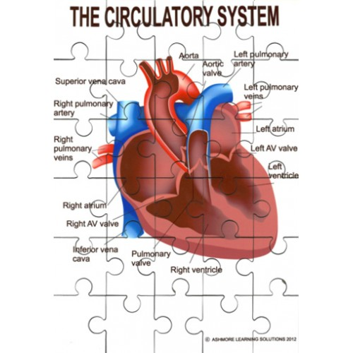 Circulatory System Jigsaw - Ashmore Learning Solutions