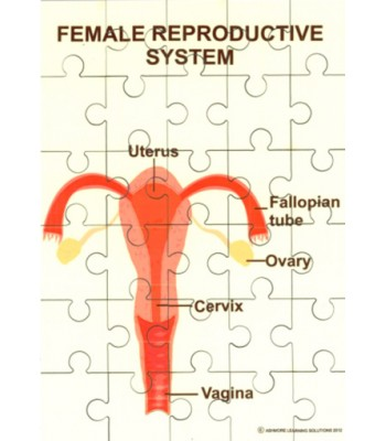 Female Reproductive System Jigsaw